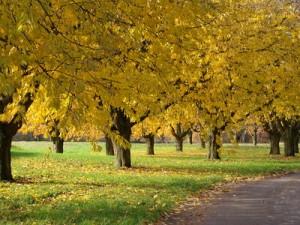 Traumhochzeit Im Herbst Das Passende Design